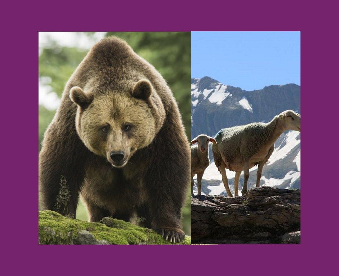 LA CHRONIQUE DE JEAN-CLAUDE JULÈS, 10 AOUT 2020. L'homme qui a vu l'ours. (LE TEXTE.)